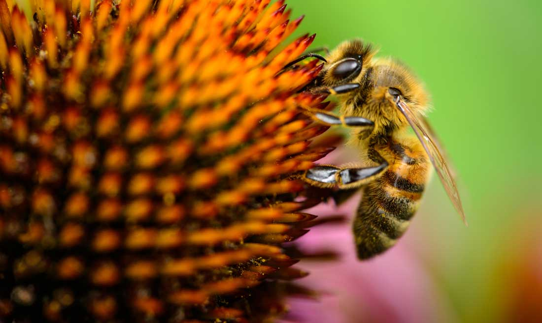 Pollen is one of the main reasons to pressure wash every spring.
